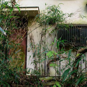 雑草の生えた空き家